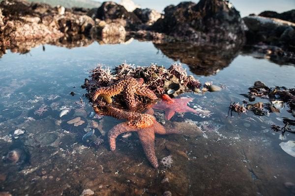 The best rockpooling spots in Britain