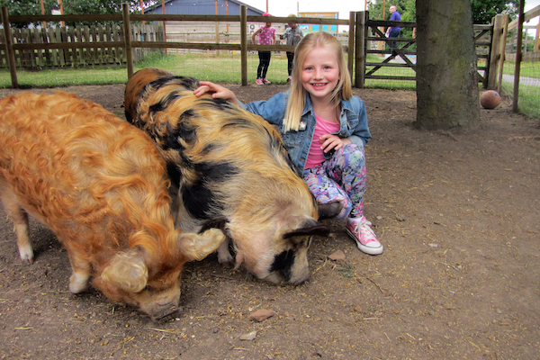 Children with pigs at Marsh Farm