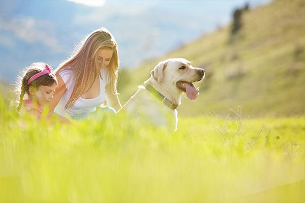 Pet Friendly Holidays